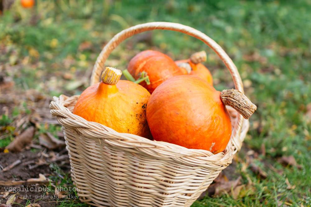 Stock photo of Harvested red kuri squash