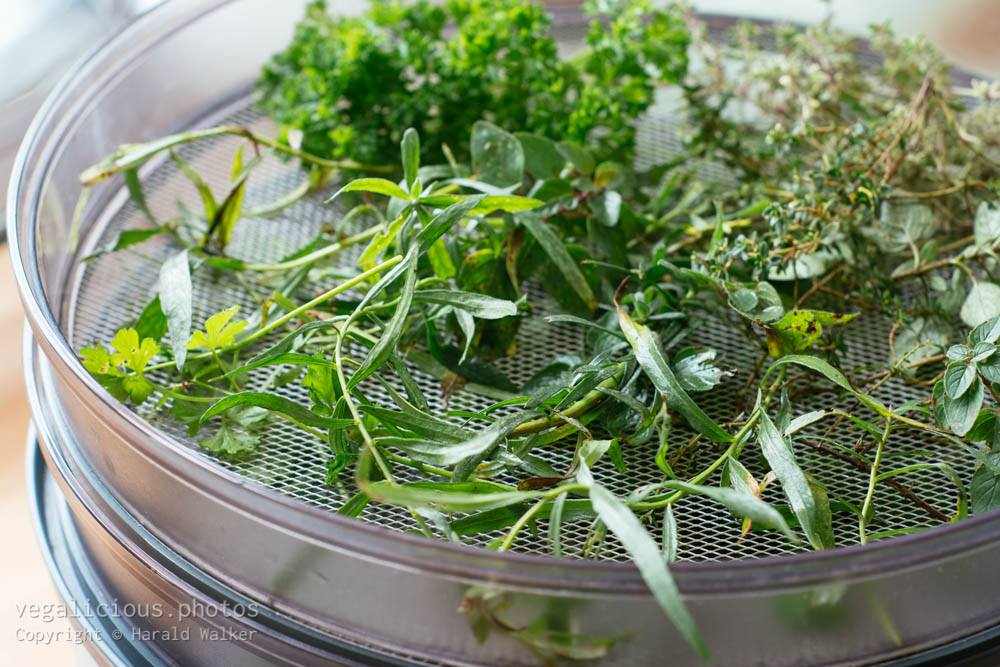 Stock photo of Drying herbs