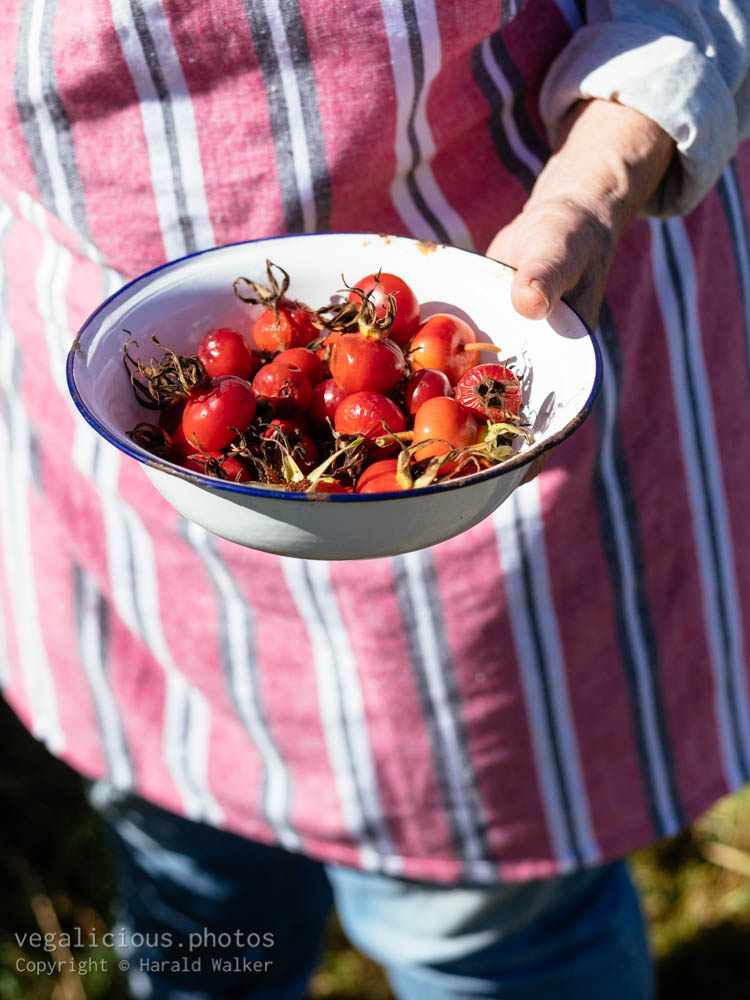 Stock photo of Bowl of rose hips