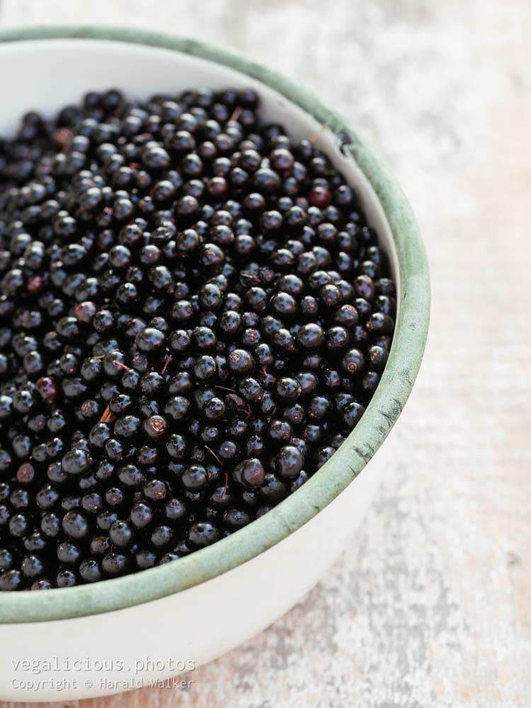 Stock photo of Elderberries