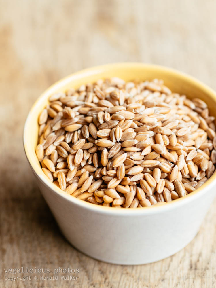 Stock photo of Spelt grains