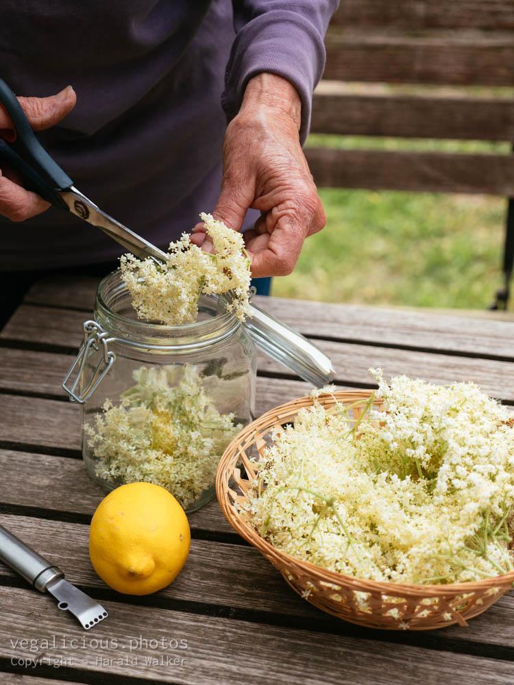 Stock photo of Cutting elderflowers