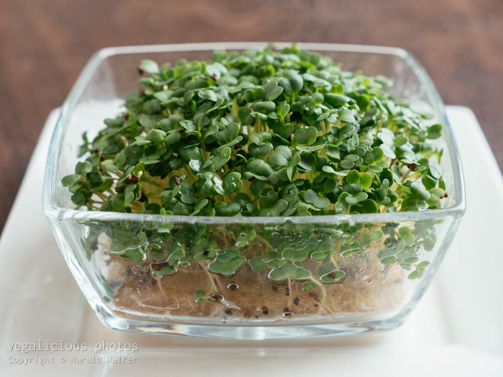 Stock photo of Broccoli Raab sprouts