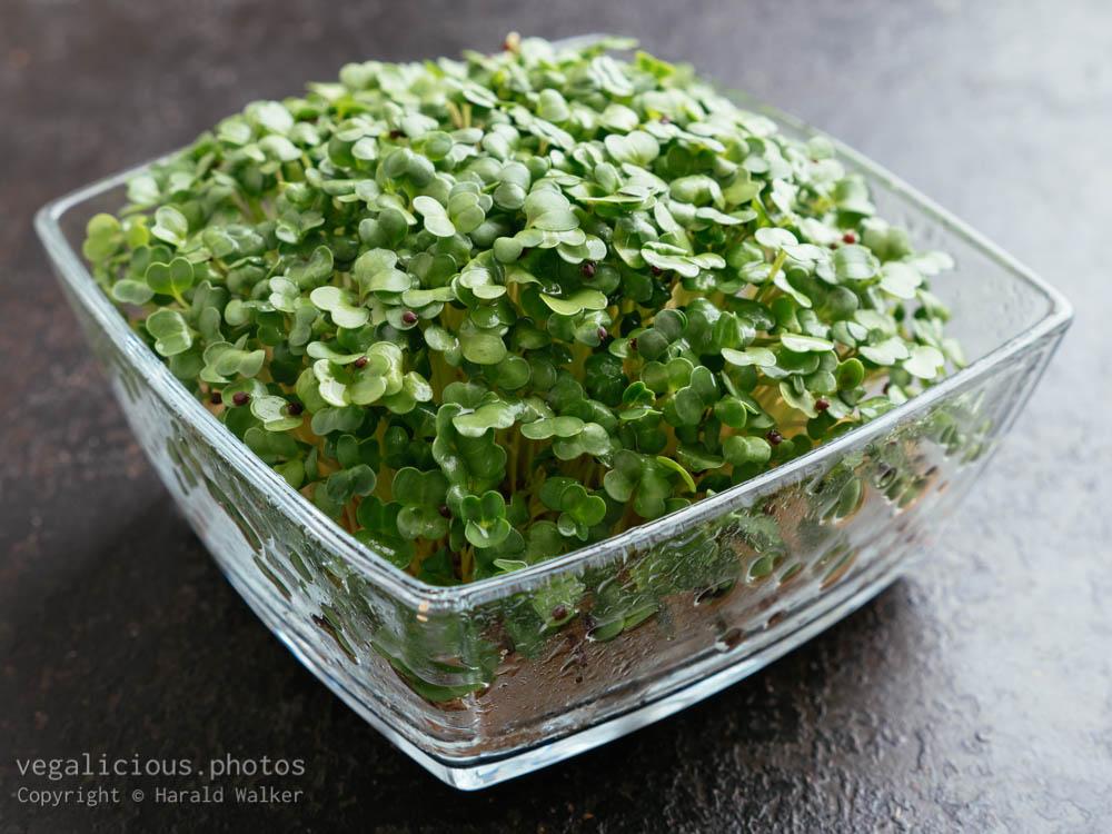 Stock photo of Broccoli Raab (Brassica rapa var. cymosa) sprouts