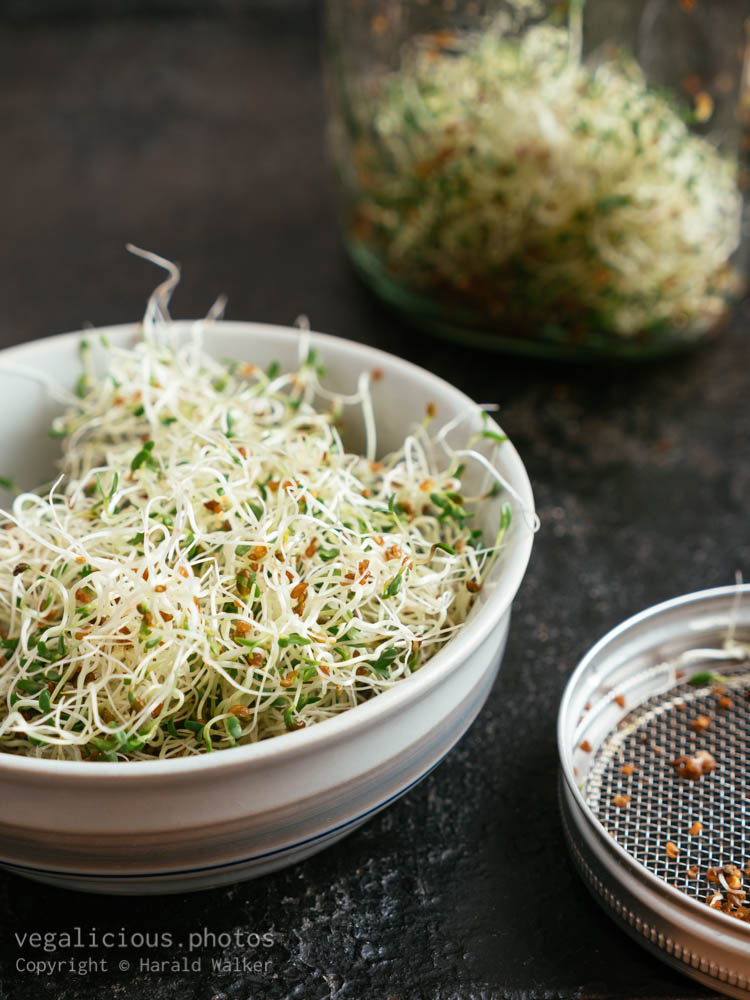 Stock photo of Alfalfa sprouts