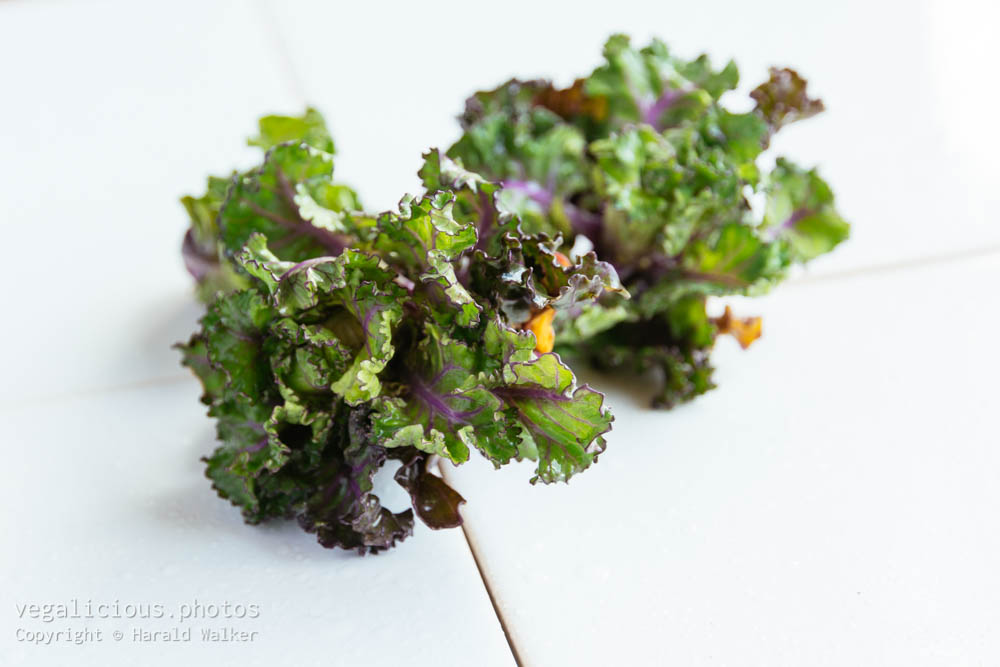 Stock photo of Washed Kale-Sprouts