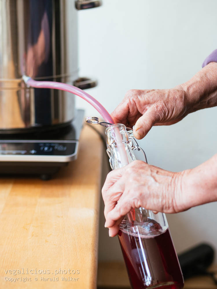 Stock photo of Making red currant juice