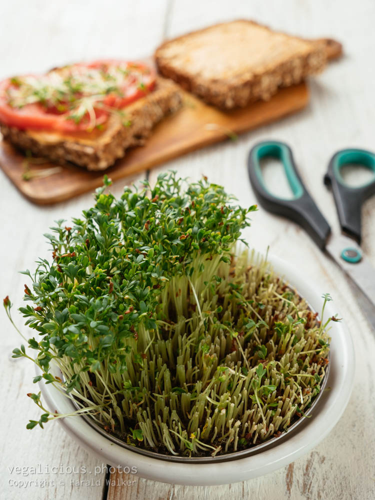 Stock photo of Sprouting dish with watercress