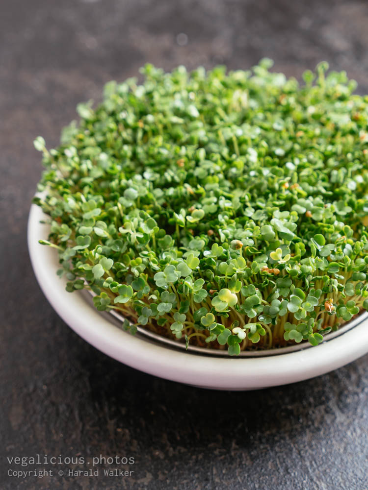 Stock photo of Fresh arugula sprouts