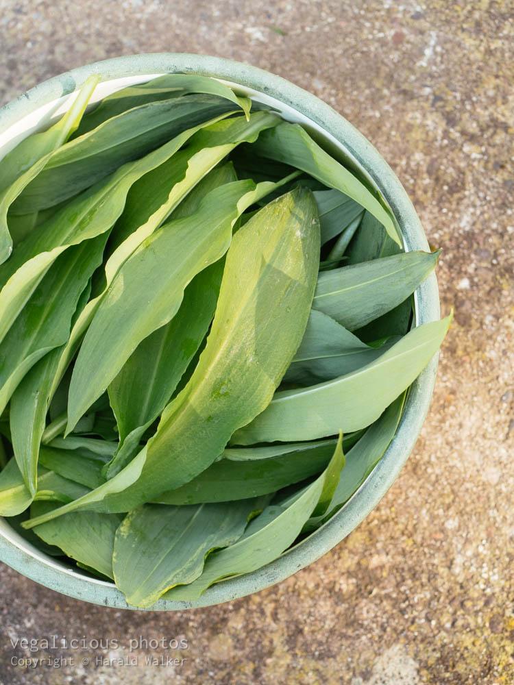 Stock photo of Fresh wild garlic