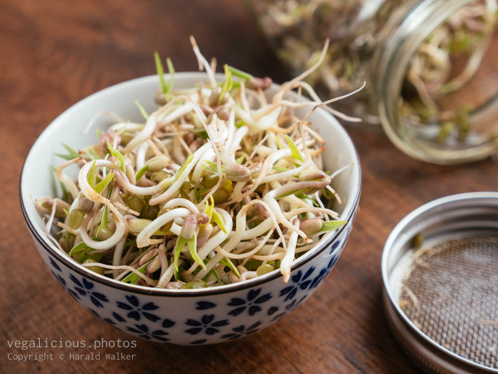 Stock photo of Mung bean sprouts