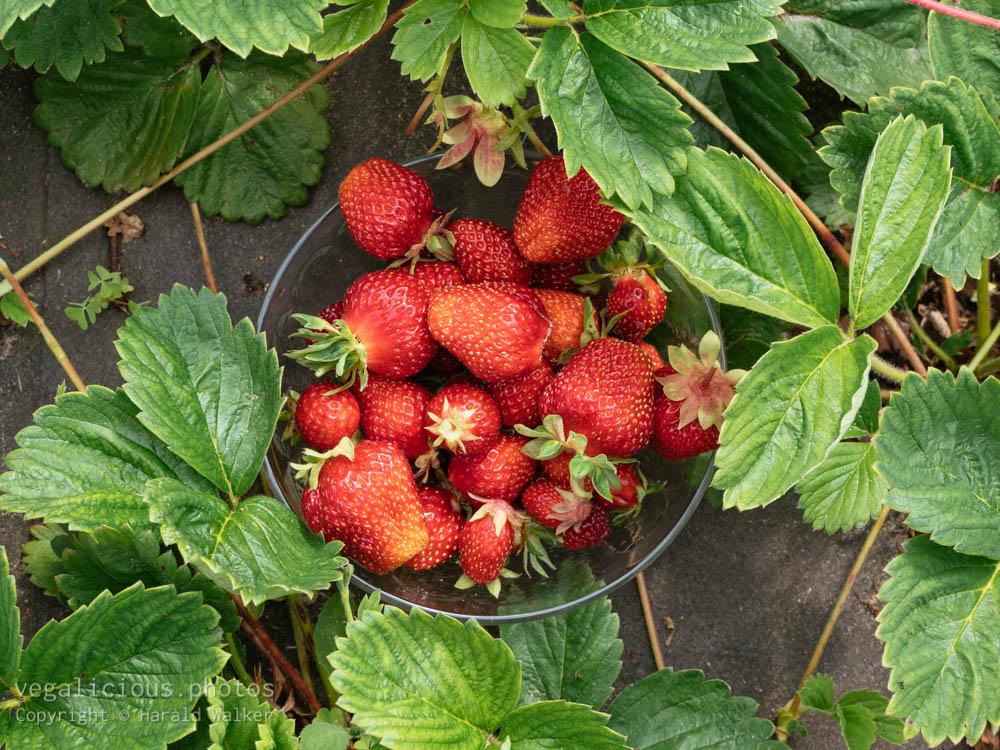 Stock photo of Fresh strawberries
