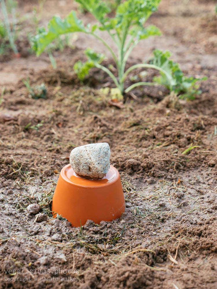 Stock photo of Clay Pot Irrigation System