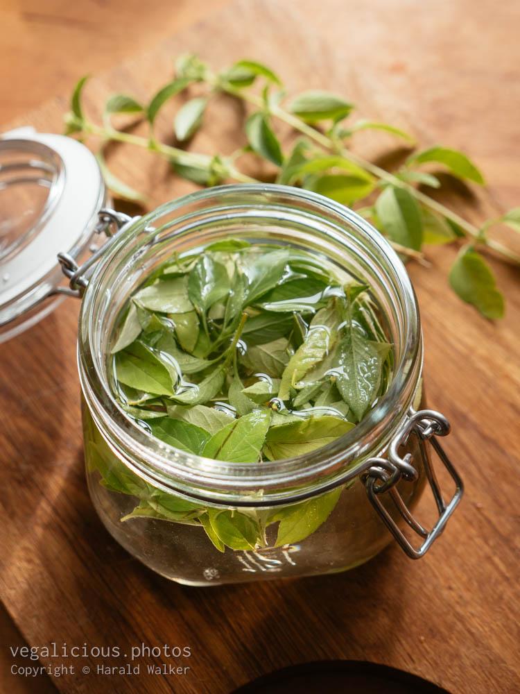 Stock photo of Lemon basil vinegar
