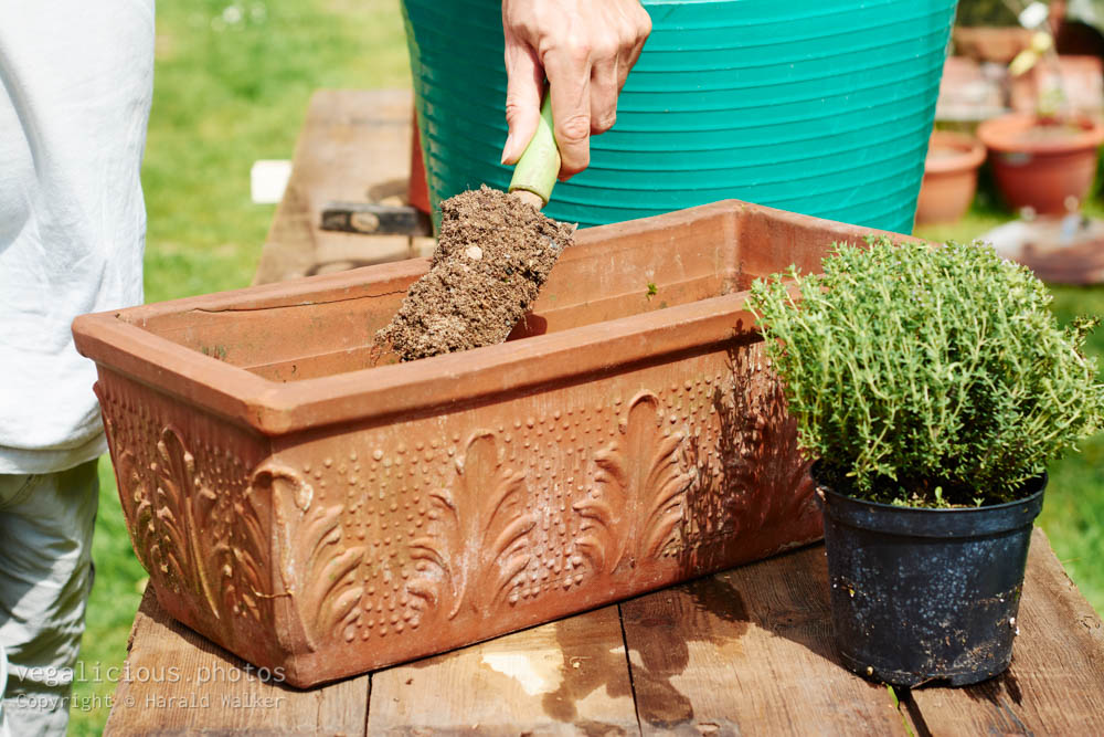 Stock photo of Filling planting container with soil