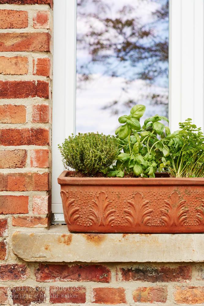Stock photo of Kitchen herbs