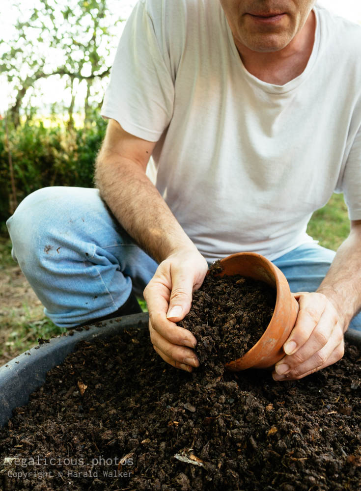 Stock photo of Gardener filling a terra cotta pot with compost