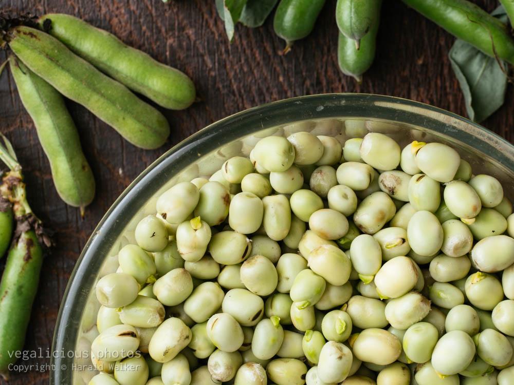 Stock photo of Fresh field beans
