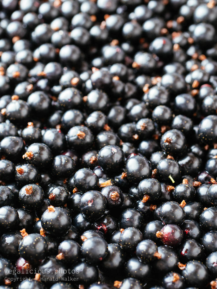 Stock photo of Blackcurrant berries