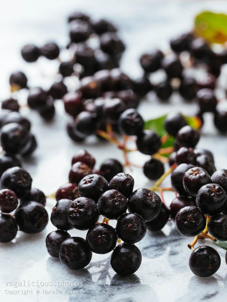 Stock photo of Purple chokeberries