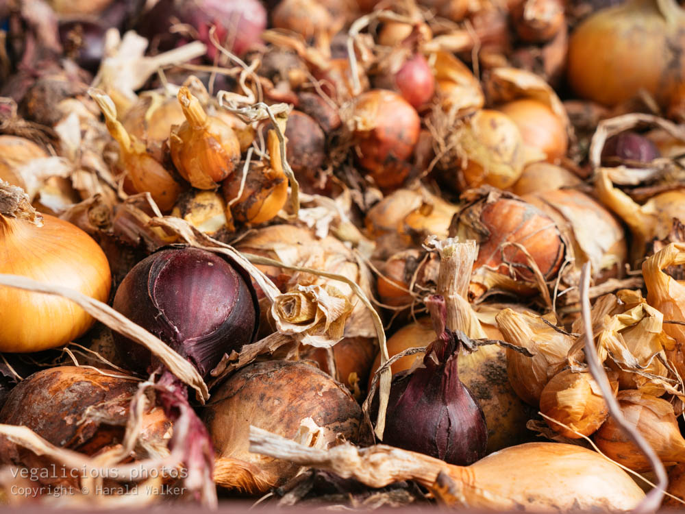 Stock photo of Harvested onions