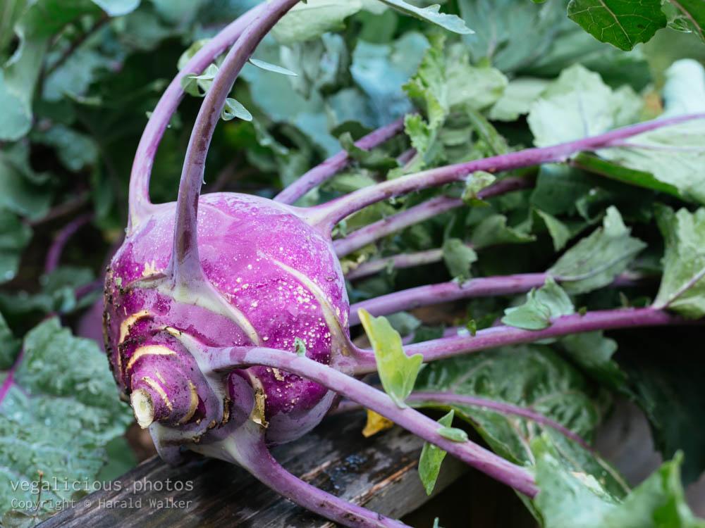 Stock photo of Purple kohlrabi