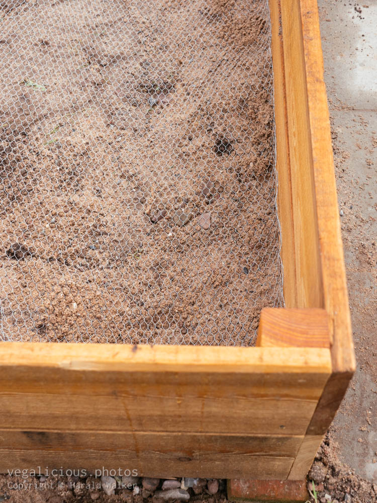 Stock photo of Raised bed with chicken wire