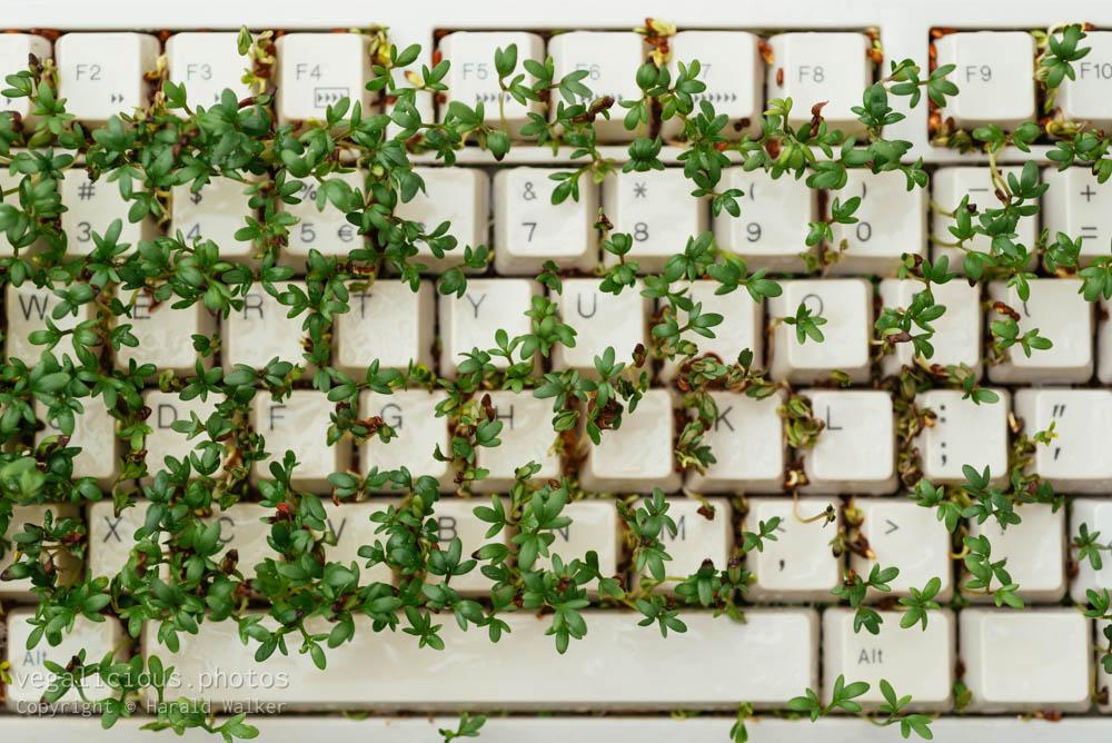 Stock photo of Cress on keyboard