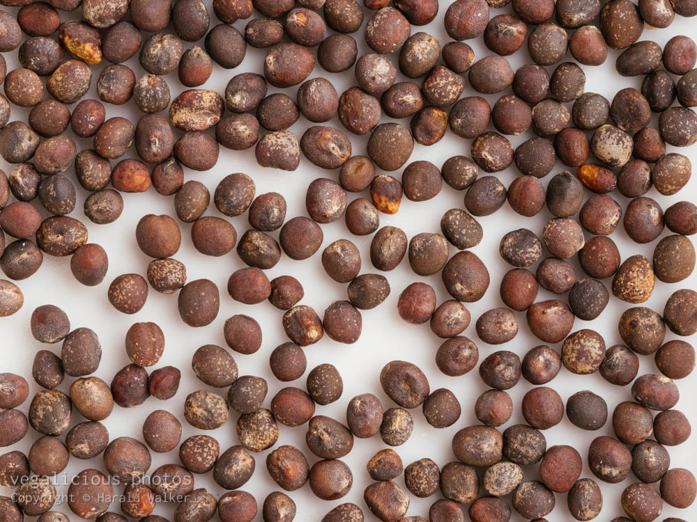 Stock photo of Red cabbage seeds