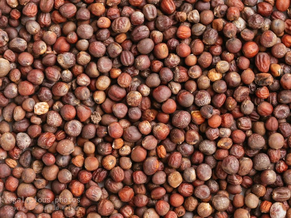 Stock photo of Purple cauliflower seeds