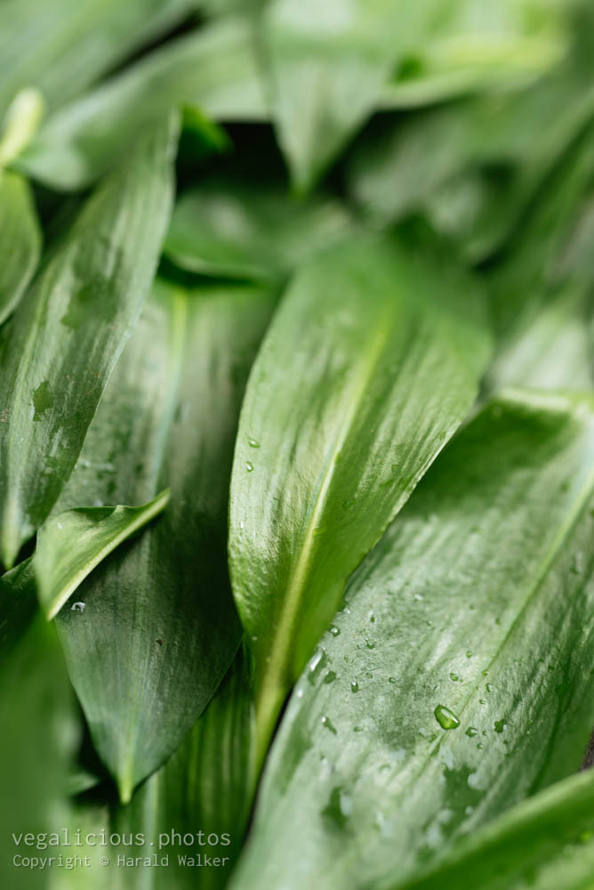 Stock photo of Fresh wild garlic leaves