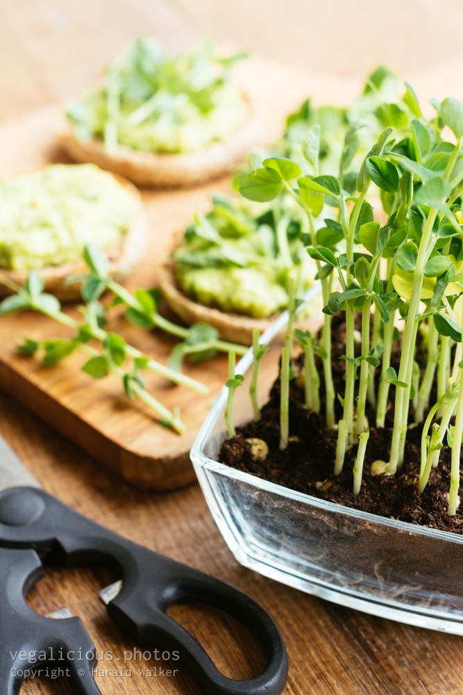 Stock photo of Muffins with an avocado/fava bean mash and pea sprouts
