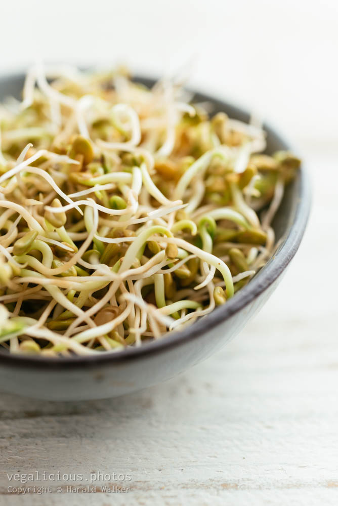 Stock photo of Fenugreek Sprouts
