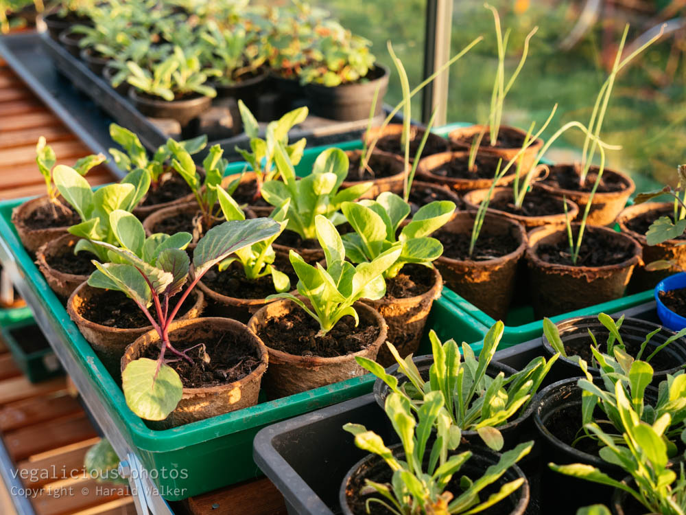 Stock photo of Seelings in greenhouse